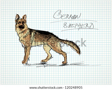 German shepherd / Vector sketch of dog