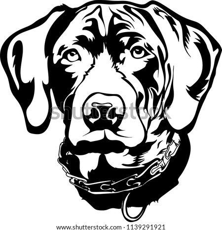 German Shorthaired Pointer dog breed face head isolated pet animal domestic pet canine puppy purebred pedigree hound portrait peeking paws smiling smile happy art artwork illustration design