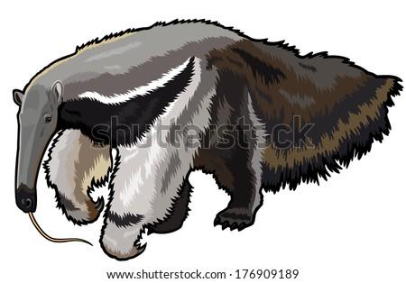 giant anteater  myrmecophaga