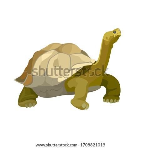 Giant tortoise animal. Turtle reptile in nature wildlife. Vector Stock photo ©