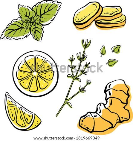 ginger  lemon  mint  thyme