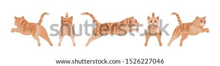 ginger tabby cat jumping