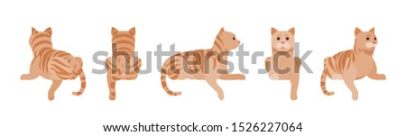 ginger tabby cat lying active
