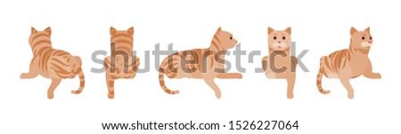 ginger tabby cat lying active