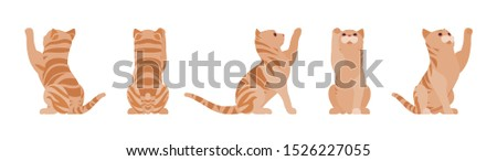 ginger tabby cat playing