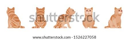 ginger tabby cat sitting