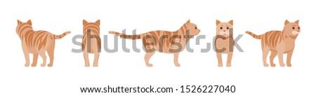 ginger tabby cat standing
