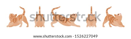 ginger tabby cat stretching