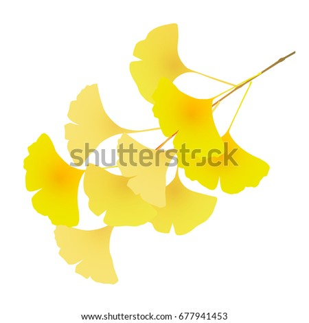 ginkgo autumn leaves fall icon