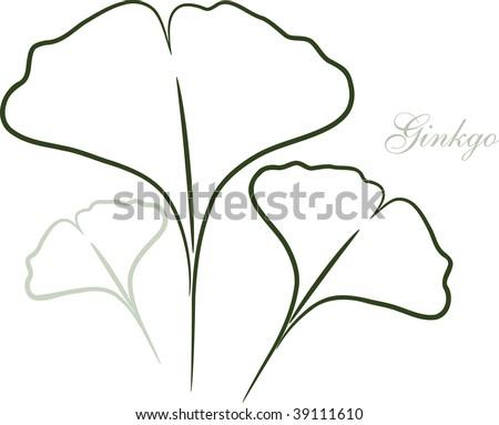 Ginkgo leaf sketch
