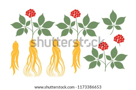 Ginseng plant. Isolated ginseng on white background. EPS 10. Vector illustration