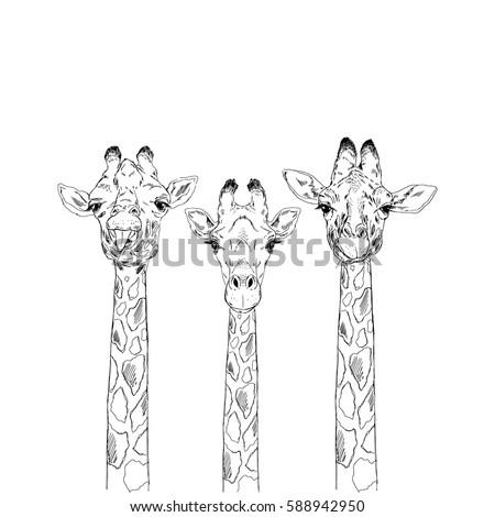 giraffe heads sketch set