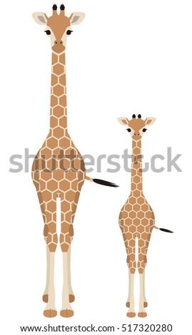 Giraffe. Parent and child.