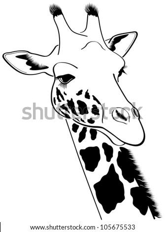 Giraffe - Vector Illustration - 105675533 : Shutterstock