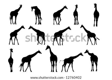 Giraffe Silhouette Giraffe Vector Silhouette