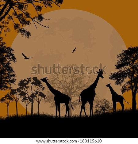 giraffes silhouette in africa