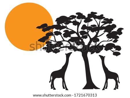 giraffes silhouette on sunset