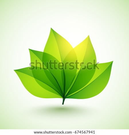 Glossy green leaves for Nature concept.