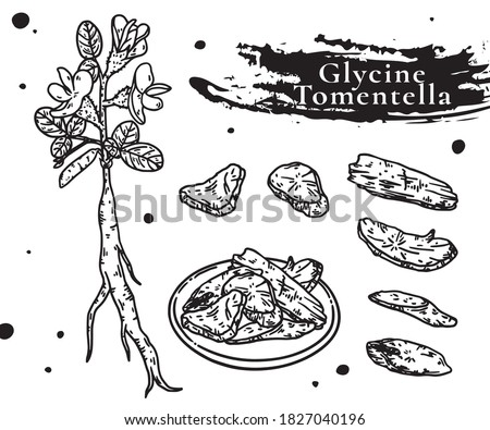glycine tomentella has been