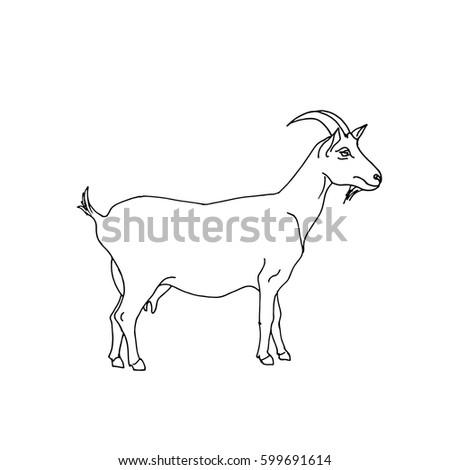 Goat hand drawn vector illustration