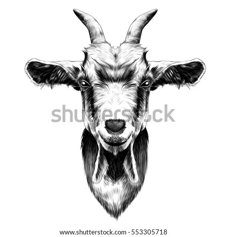 goat head vector black and white sketch