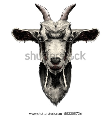 goat head vector color drawing