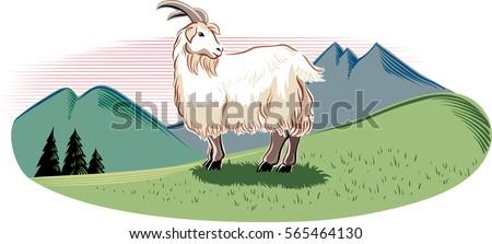 goat in a mountain landscape