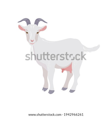 Goat isolated on white. Domestic farm animal. Vector Foto stock ©