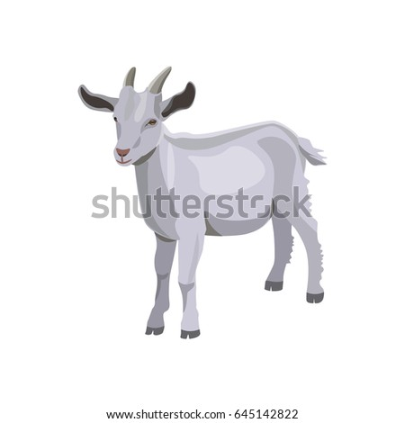 Goat kid. Vector illustration