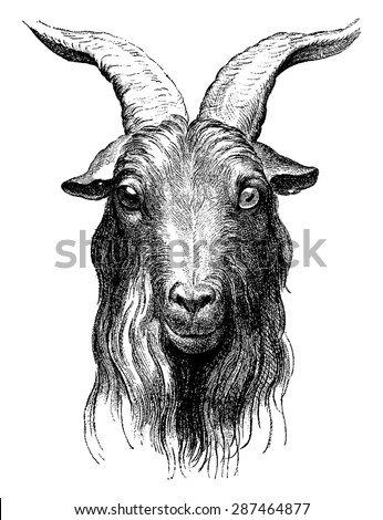 Goat, vintage engraved illustration. Earth before man - 1886.