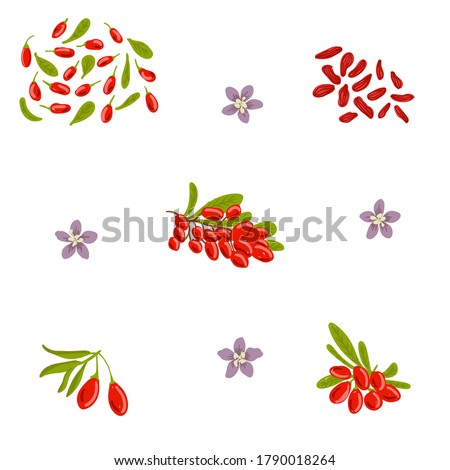 Goji vector illustration set, design template. Goji, wolfberry hand drawn berries with flowers and leaves Stock photo ©