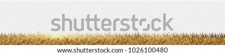 gold grass is longitudinal to