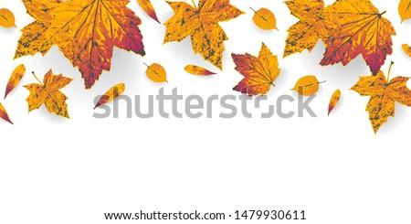 golden autumn leaves border