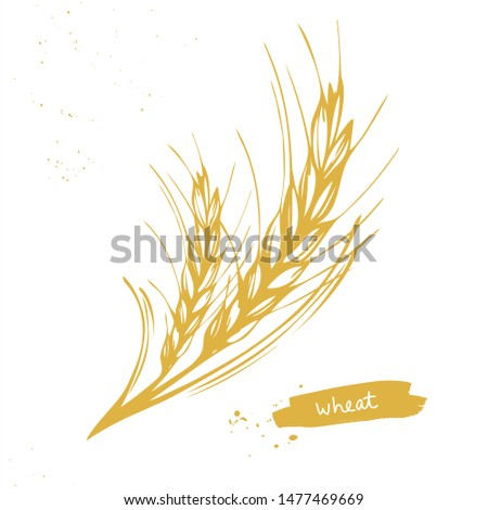 Golden barley or wheat ear symbol on white background. Hand drawn vector illustration for bakery, tags or labels design