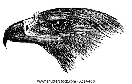 Philadelphia+eagles+logo+