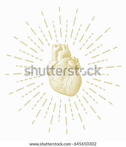 Golden engraving human heart illustration on white background with shining star burst stroke drawing