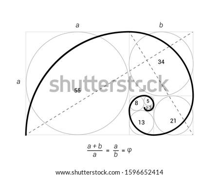 Golden ratio vector proportion spiral section. Fibonacci golden ratio geometry.
