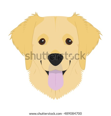 golden retriever dog isolated