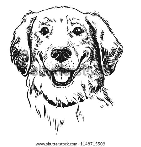 golden retriever dog  smiling