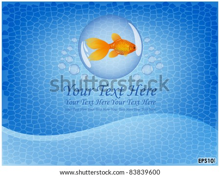 goldfish is located on a blue