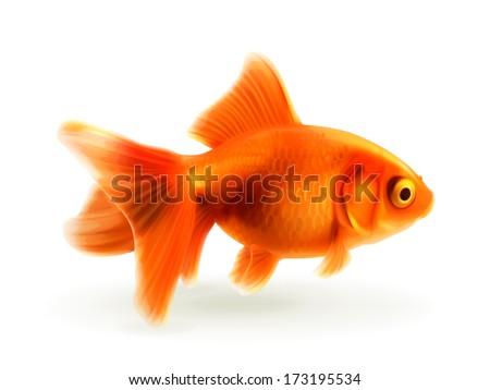 goldfish  photo realistic