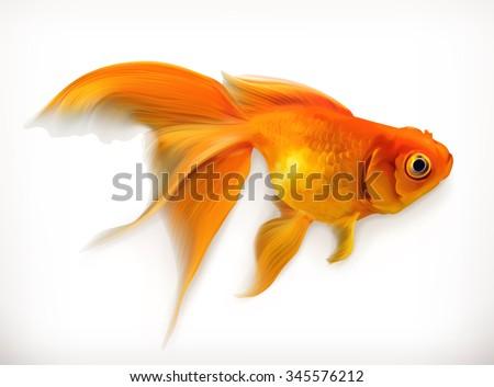 goldfish  realistic vector