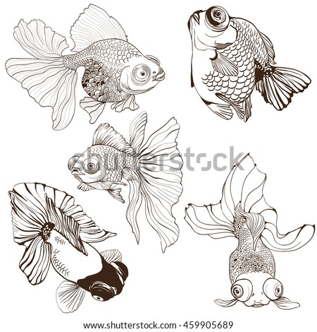 goldfish   set of vector