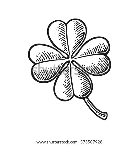 Good luck four leaf clover. Vintage black vector engraving illustration for info graphic, poster, web. Isolated on white background.