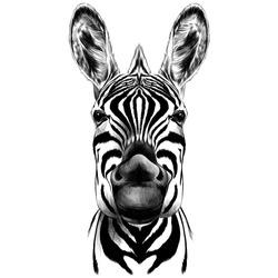 good Zebra smiling black and white face sketch vector