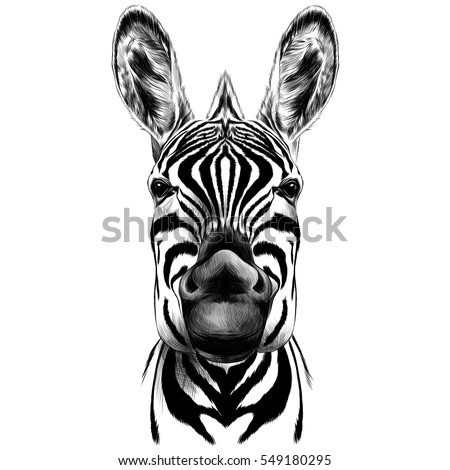 good zebra smiling black and