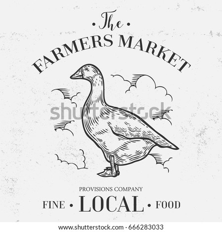 Goose, duck animal, farmers market banner. Hand drawn sketch in a graphic style. Vintage vector engraving illustration with ribbon for poster, web. Isolated on white background