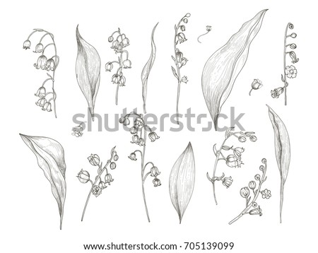 Gratis Lily Pattern Vector Download Gratis Vectorkunst En Andere