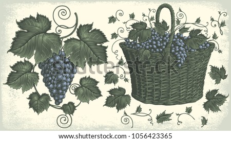 grape cluster and a basket of