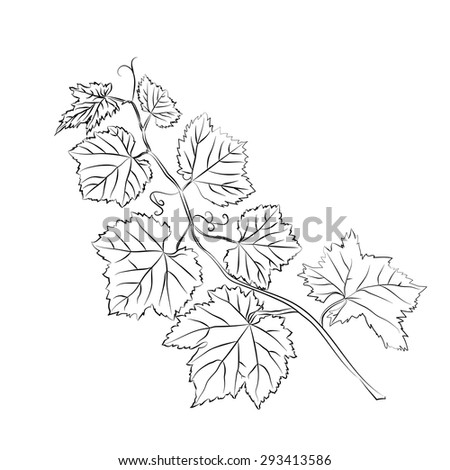 grape leaves baroque plants